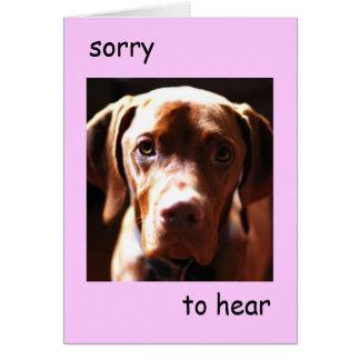 Cartão Vizsla - pesaroso ouvi-lo seja pawly (o rosa)