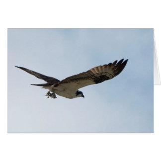Cartão Vôo do Osprey com os peixes em suas garras