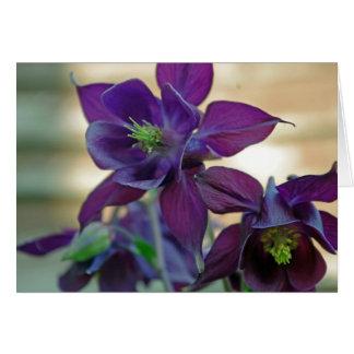 cartão vulgar da flor do aquilegia