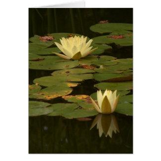 Cartão Waterlilies branco