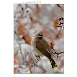 Cartão Waxwing de cedro adulto no hawthorn com neve,