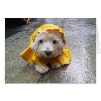 Cartão Westie no Mac amarelo da chuva!
