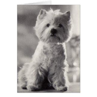 Cartão Westie preto e branco