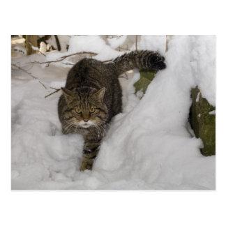 Cartão - wildcat escocês