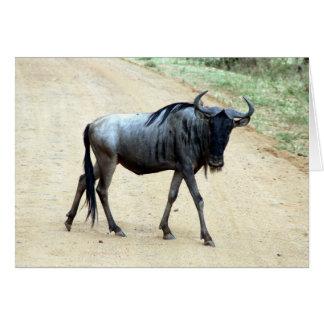 Cartão wildebeest magro