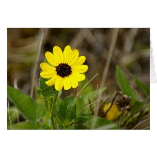 Cartão Wildflower amarelo de Florida