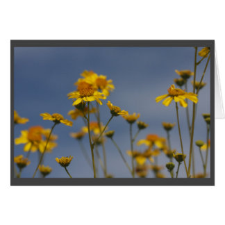 Cartão Wildflower amarelo do deserto