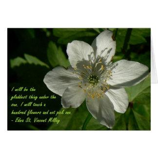 Cartão Wildflower branco Edna São Vicente Mallay