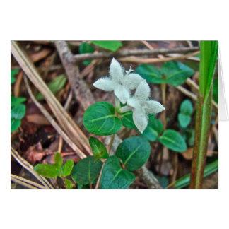 Cartão Wildflower da baga da perdiz