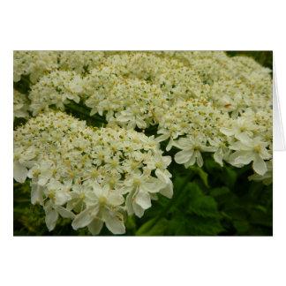 Cartão Wildflower do branco do laço da rainha Anne