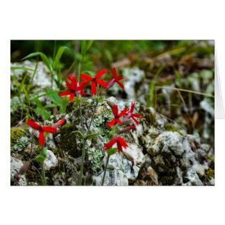 Cartão Wildflower vermelho na rocha