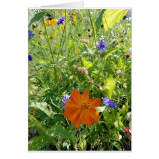 Cartão Wildflowers - beleza alaranjada