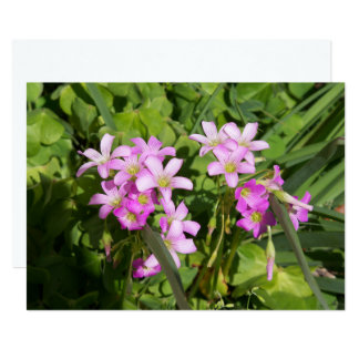 Cartão Wildflowers cor-de-rosa delicados do primavera