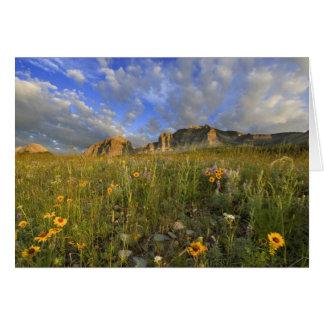 Cartão Wildflowers da pradaria na angra ventosa no muitos