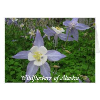 Cartão Wildflowers de Alaska-Aquilégia (Aquilegiacan)