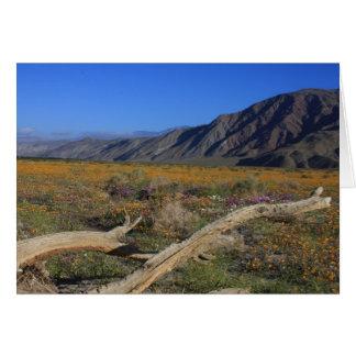 Cartão Wildflowers do deserto de Borrego Springs
