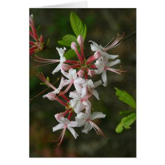 Cartão Wildflowers do PA - azálea selvagem Notecard