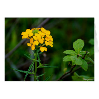 Cartão Wildflowers do primavera