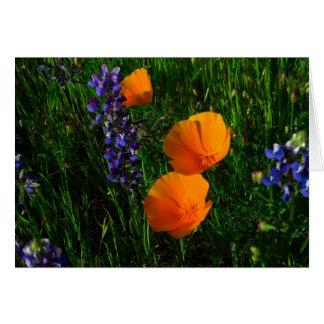 Cartão Wildflowers em Sonoma County