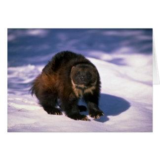 Cartão Wolverine na neve