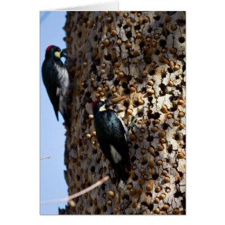 Cartão Woodpeckers da bolota