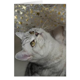 Cartão XMAS Cats