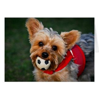 Cartão Yorkshire terrier