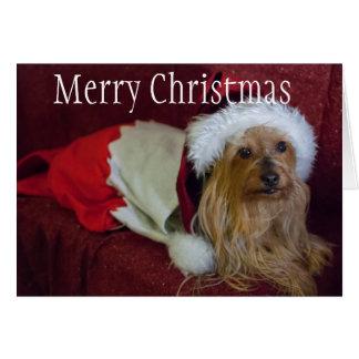 Cartão Yorkshire (yorkie)/cartão de Natal Terrier de seda