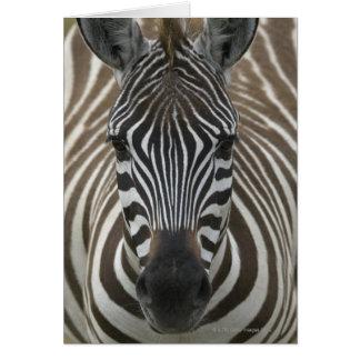 Cartão Zebra comum (quagga) do Equus, ascendente próximo