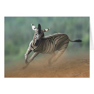 Cartão Zebra que galopa sobre a paisagem do deserto