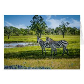 Cartão Zebras e Bluebonnets