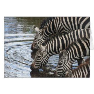 Cartão Zebras na água - personalizada