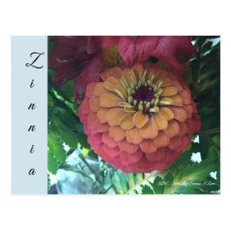 Cartão - Zinnia