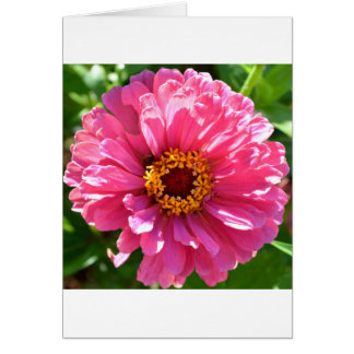 Cartão Zinnia cor-de-rosa