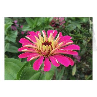 Cartão ZINNIA - cor-de-rosa e de creme vibrantes -