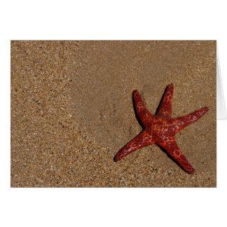 Cartões animais, estrela do mar