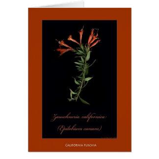 Cartões botânicos do impressão de Califórnia