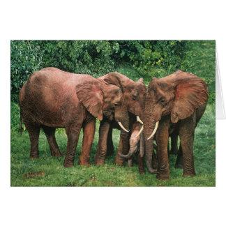 Cartões da arte dos animais selvagens de Combes da