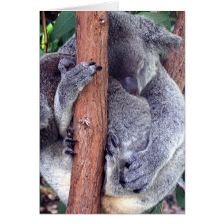 Cartões da família do urso de Koala