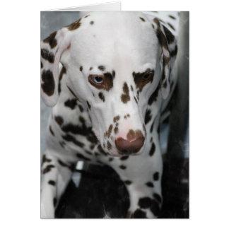 Cartões Dalmatian bonitos