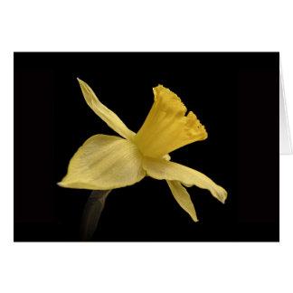 Cartões de agradecimentos amarelos do Daffodil