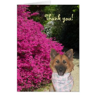Cartões de agradecimentos bonitos do cão