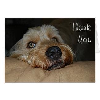 Cartões de agradecimentos customizáveis