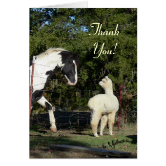 Cartões de agradecimentos da alpaca