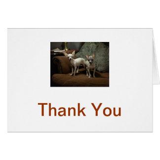 Cartões de agradecimentos da chihuahua