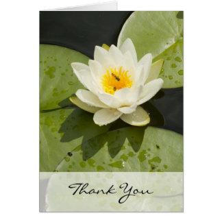 Cartões de agradecimentos das almofadas de lírio e
