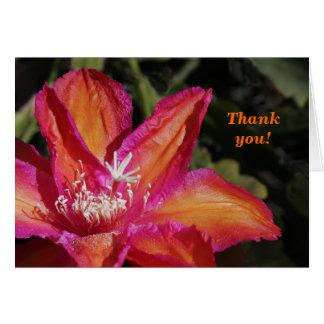 Cartões de agradecimentos de Epiphyllum