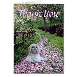 Cartões de agradecimentos de Shih Tzu