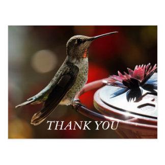 Cartões de agradecimentos do colibri