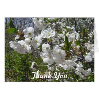 Cartões de agradecimentos do Dogwood